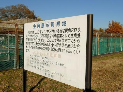 金魚飼育展示池