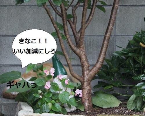 2014_0712_174752-IMG_3016.JPG