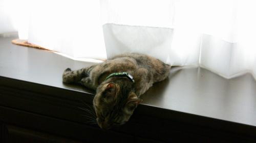 猫の熱中症対策