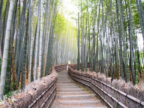 化野念仏寺・竹林の小路.JPG