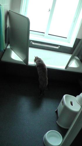 風呂を覗き込む猫