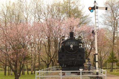 2014_05_12_丸山公園と役場の桜_053.JPG