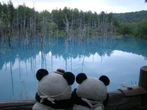 青い池にパンダ.jpg