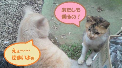 NEC_0410-2.jpg