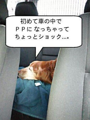 DSC_0642_3.jpg