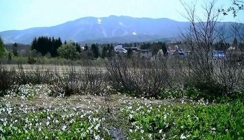2016_4_25砺波チューリップ (17).jpg