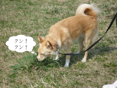 クン!クン!.jpg