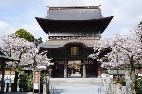 阿蘇神社の桜.jpg
