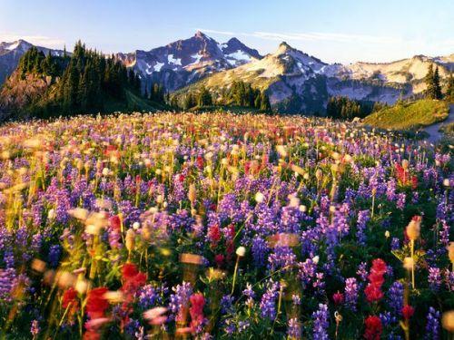landmark-national-park-mount-rainier_34820_600x450.jpg