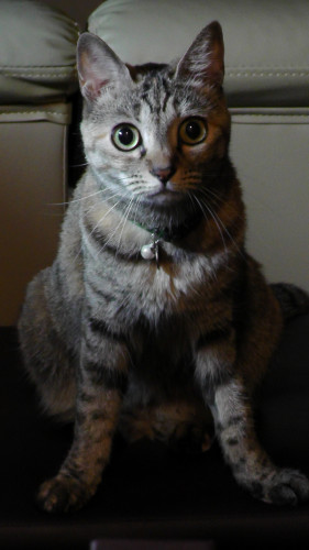 猫の年齢詐称行為