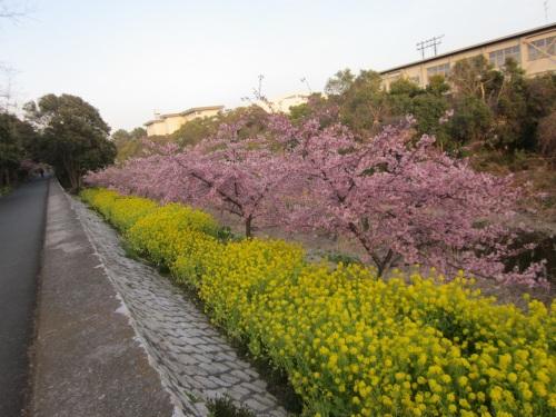 IMG_4466桜2.jpg