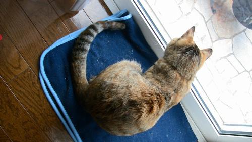 窓の外を見るネコ