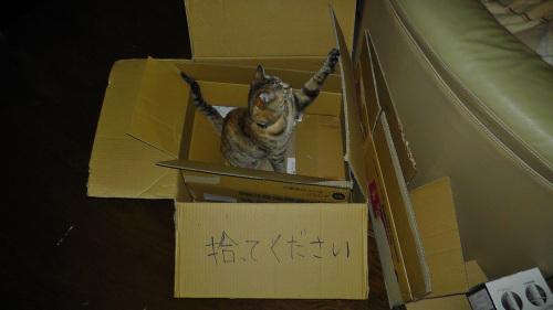 家庭内捨て猫