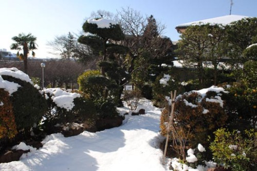 20120115雪の日の庭.jpg