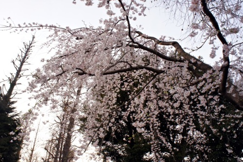 yomotsuku20140329-2.JPG