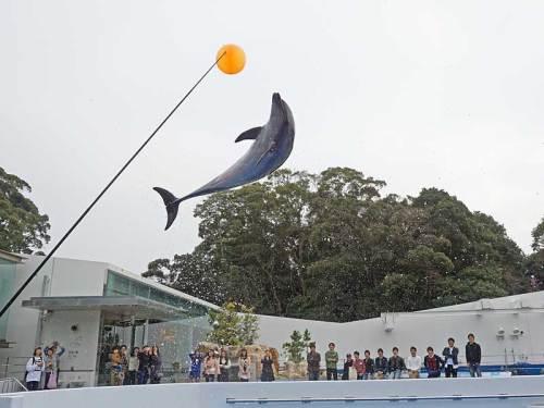 イルカのジャンプ160308.jpg