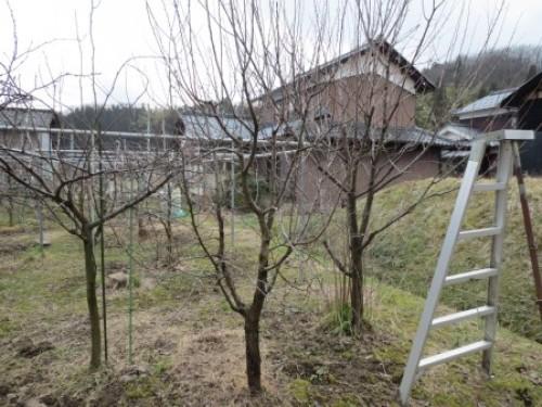 素人果樹栽培と特選園芸グッズ