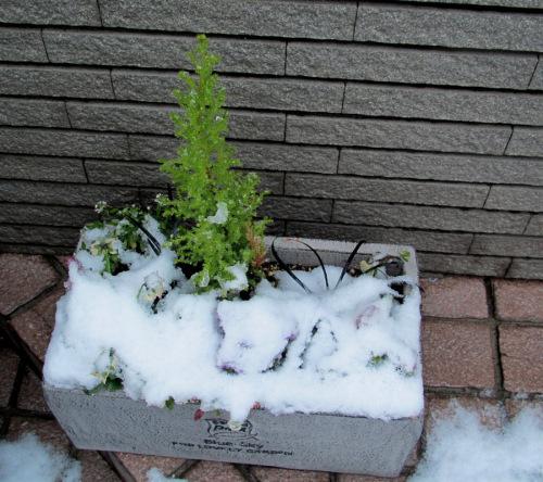 ミルフルに雪.JPG
