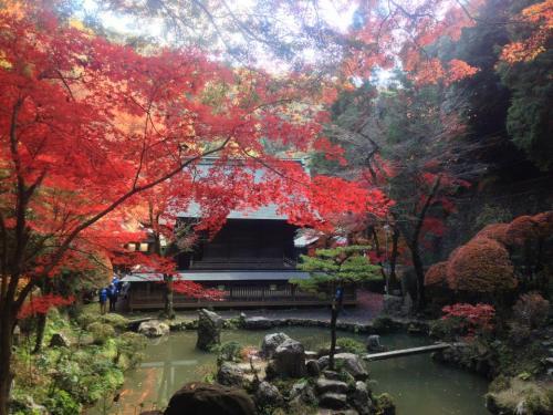 春日井の観光地】内々神社の紅葉♪【名所】 | 「ほっ」とひといき ...