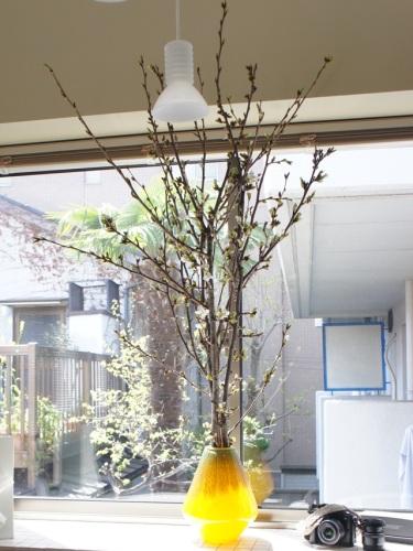 yomotsuku20140406-8.JPG