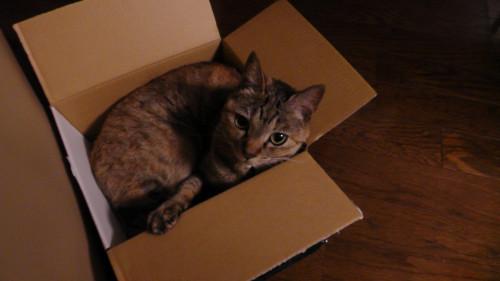 だだちゃ豆の箱に入るネコ