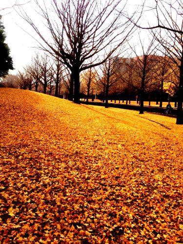 茨城県のつくばにて1.jpg
