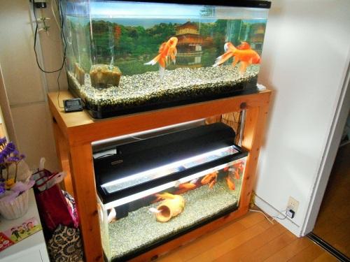 90センチ規格水槽