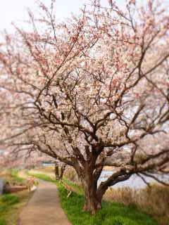 春 051(V.2012_04_10__03_28_45).jpg