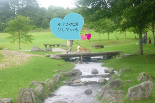 水遊び.jpg