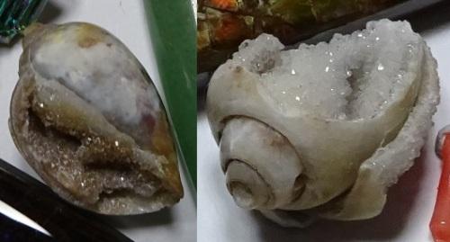 巻貝の化石.jpg