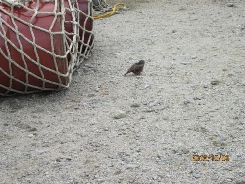 IMG_3345小鳥.jpg