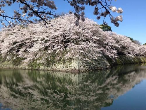 彦根城の外堀2.jpg