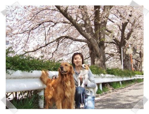 2006-0404桜-2.JPG