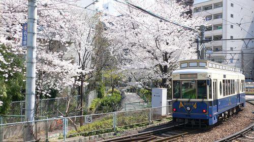 120409神田川桜4.JPG