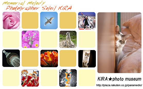 ブログトップ写真 memorial melody KIRA★photo museum blog_top201204.jpg