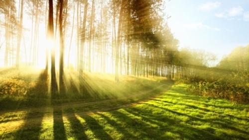朝の光.jpg