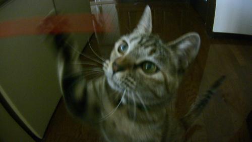 棒にじゃれつく猫