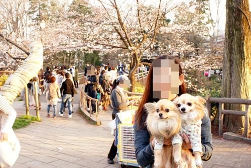 yomotsuku20140329-4.JPG