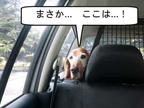 PhotoWonder_share2.jpg