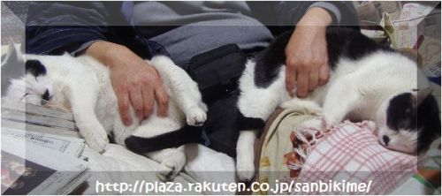 20120402_nagai_12.jpg