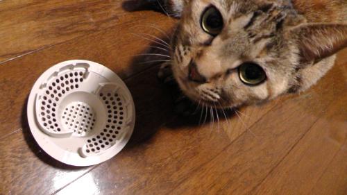 「髪の毛くるくるポイ」と猫