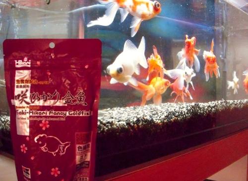 金魚に餌をやりましょう