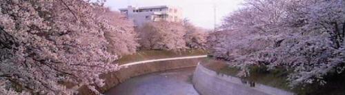 2006-0330-1.jpg