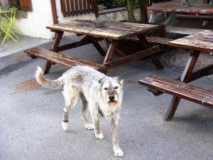 犬(V.2014_11_13__09_35_25).jpg