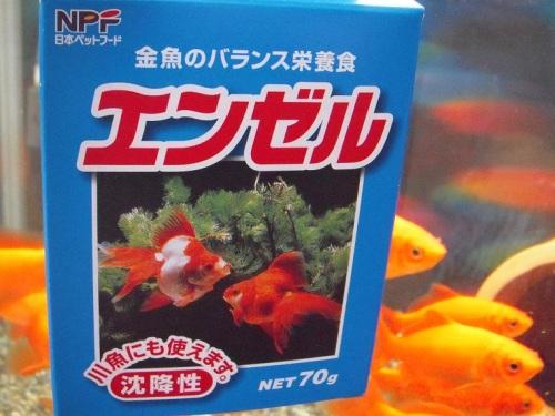 金魚餌 「エンゼル」