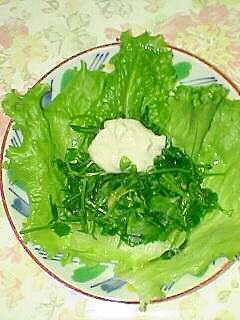 豆苗と春レタスのサラダです♪