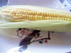 無難においしい蒸しトウモロコシ