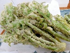 春の山菜 こごみの天ぷら