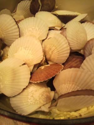 スープが最高!ルクルーゼでホタテの稚貝で白菜鍋