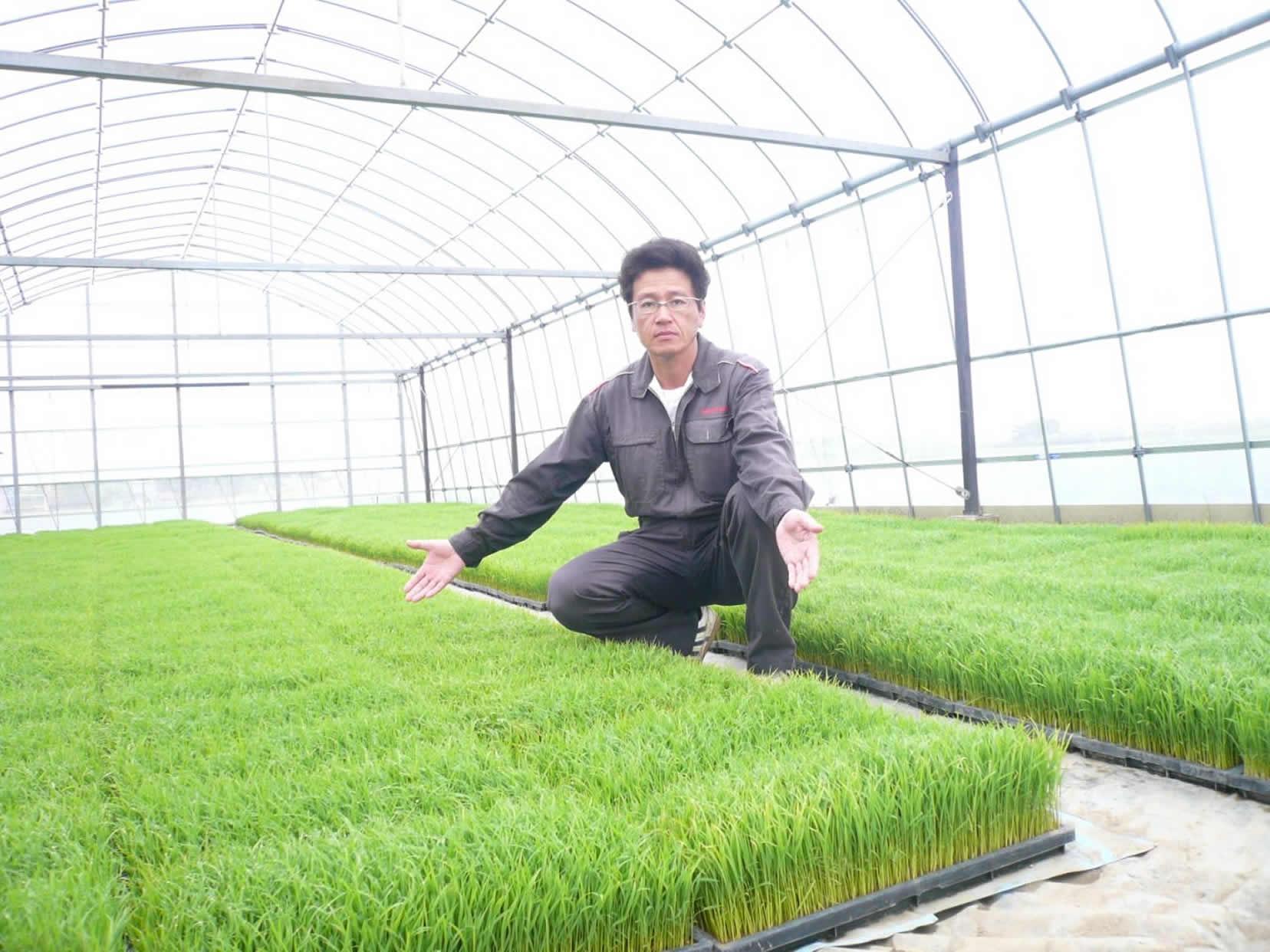 農薬・化学肥料を使用しない「コシヒカリ」
